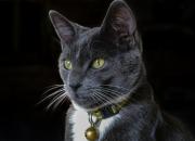 Každá čarodějnice má mít kočku (3)