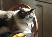 Porcelánová kočka